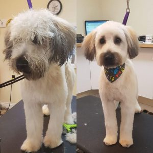 Pet Spaw, Family Dog Professional Full Service Grooming, Trimming, Aurora, Toronto, Keswick, Newmarket