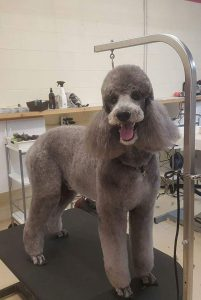 Paws in the Bath, Full Service Professional dog grooming, No-Cage Facility, love dogs, Aurora, Toronto, Keswick, Newmarket