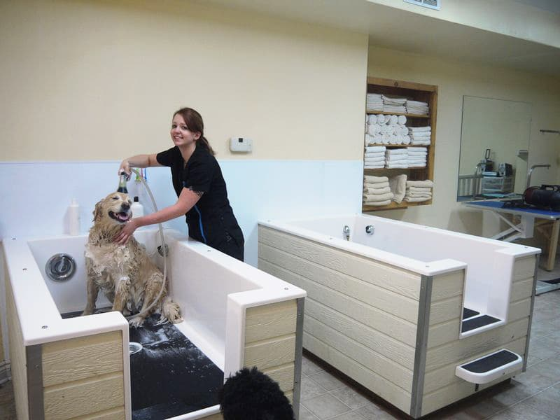 Diy dog grooming tub diy ideas do it yourself dog wash facility paws in the bath solutioingenieria Images