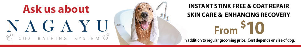 Paws in the bath where your best friend is our favourite client solutioingenieria Choice Image