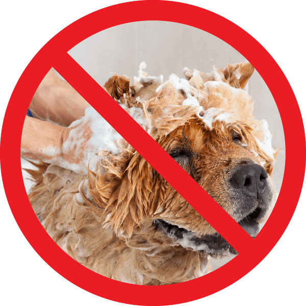 No Do-It-Yourself Dog washes due to the present Covid 19 restrictions.